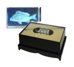 Small Croaker Crystal Laser Block & Coloured LED Display Stand